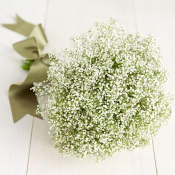 81631.babies_breath_bouquet