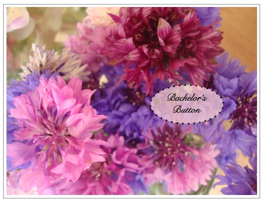 DIY flowers | bachelor's buttons | how to arrange your own summer wedding flowers