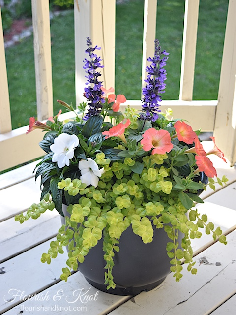 Beautiful Container Garden Design | Pretty Planters!